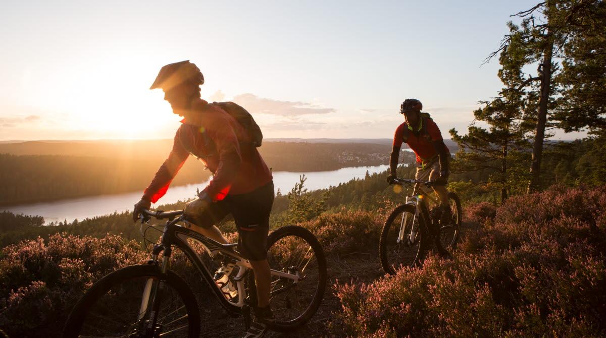 Två män cyklar mountainbike på skogsstig