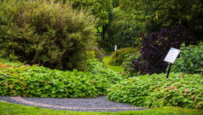 Ett grönskande trädgård med en grusgång som leder in i en lummig trädgård. Utmed gången sitter informationsskyltar.