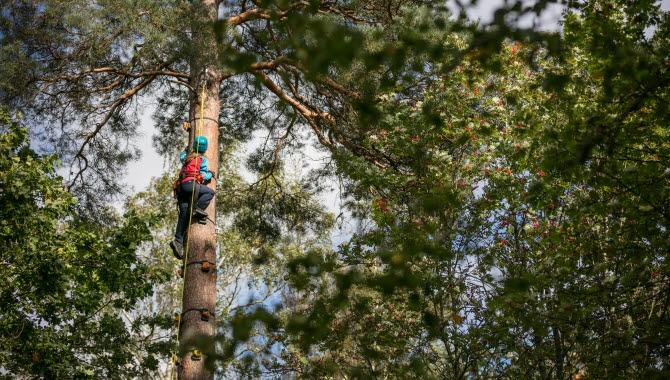 En person iförd sele och hjälm klättrar upp för ett träd bland trädtopparna.