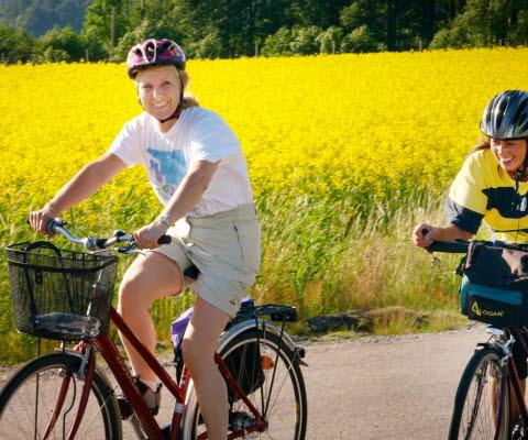 Två personer som cyklar på en väg med gult rapsfält i bakgrunden.