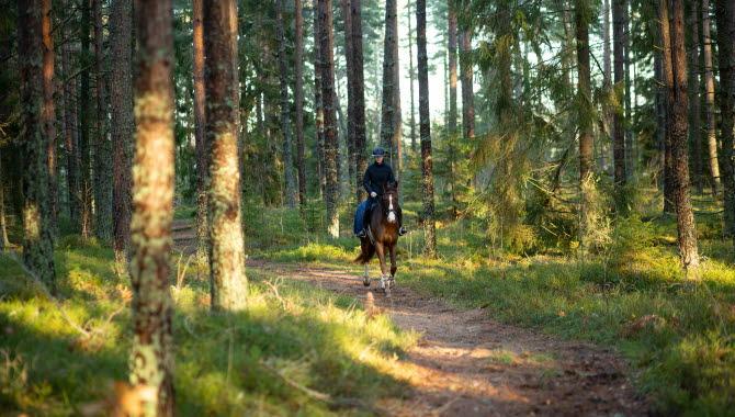 Ryttare på häst i skogen.