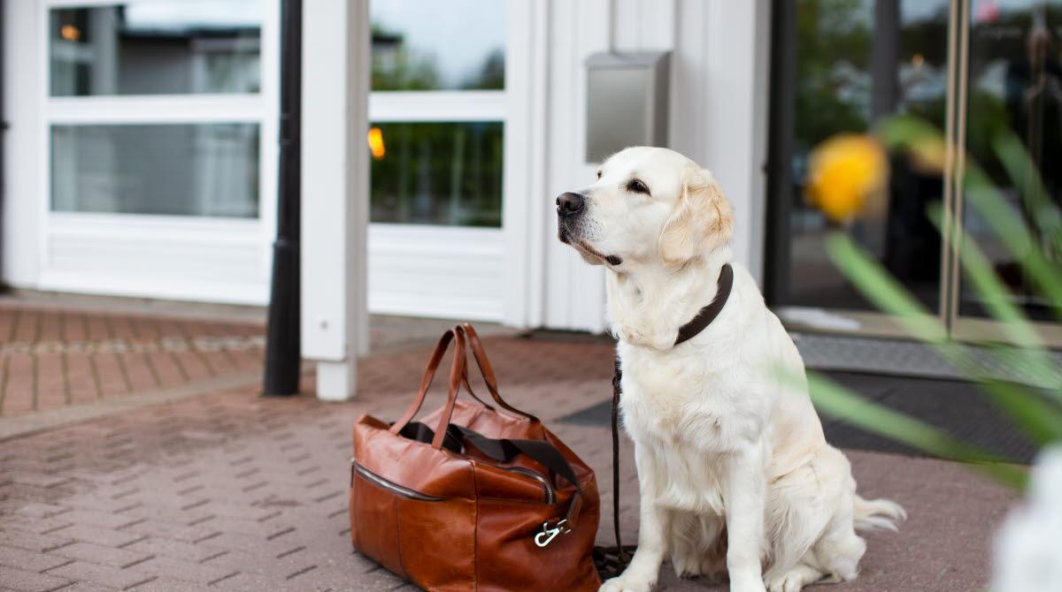 Hund i Västsverige