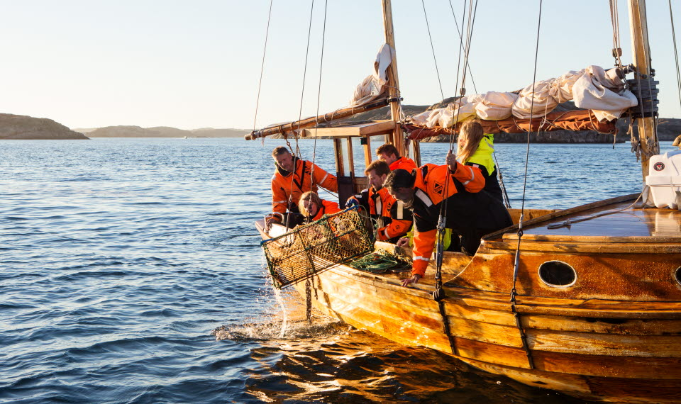 Sällskap i träbåt tar upp hummertinaa