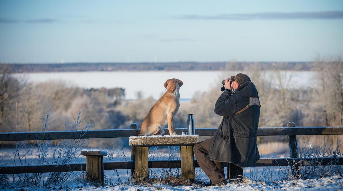 Man sitter med kikare. Hund sitter bredvid på ett träbord vid rastplatsen. Det är vinter.