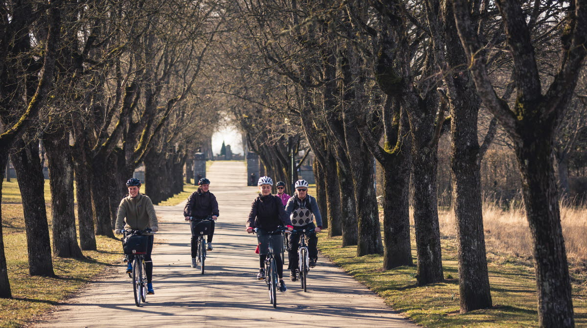 En grupp männniskor som cyklar i en trädallé.