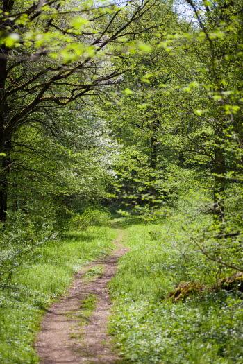 En stig som leder in bland lummiga träd en solig dag