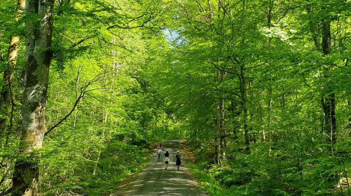 Bokskog, naturreservat, Herrljunga