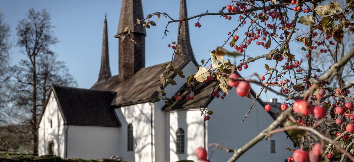 Kungslena kyrka syns med en gren av rönnbär i förgrunden