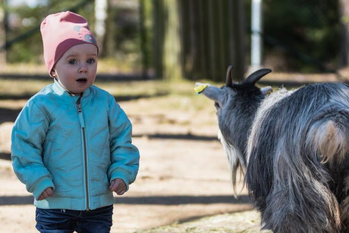 Barn på Mini-Zoo i Tibro