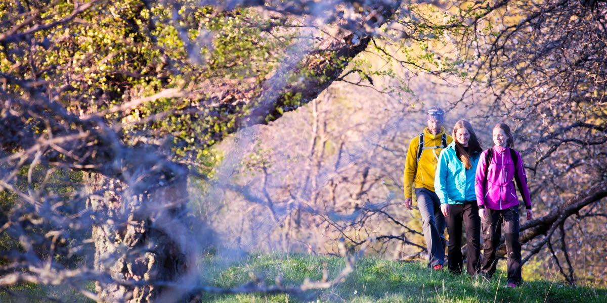 Tre vandrare i färgglada kläder vandrar på en ås. Runtomkring dem knoppar träden.