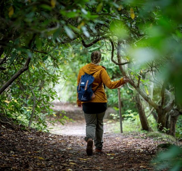 Kvinna i gul jacka vandrar längs en lövtäckt stig omgiven av gröna snirkliga rhododendronblad