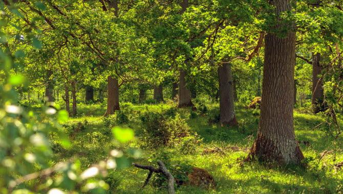 Naturbild med Ekar och grönt gräs.