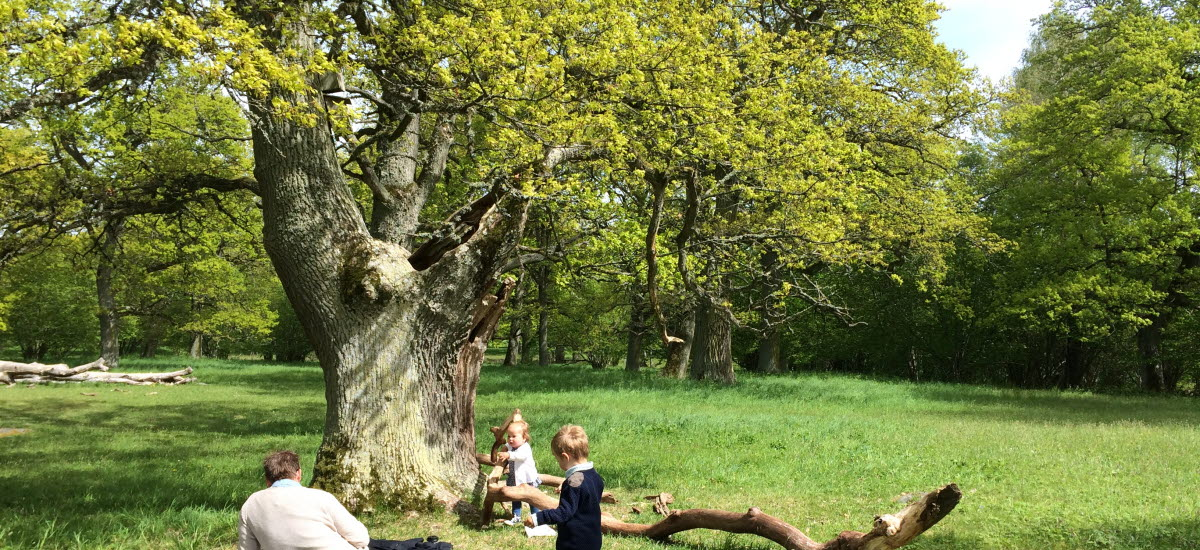 Två små barn och en vuxen man har picknick i grönskande Levene Äng.