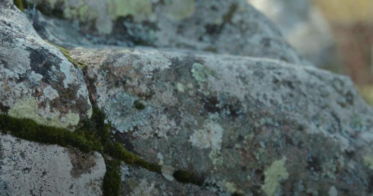 Närbild på en sten vid Askeberga Skeppsättning