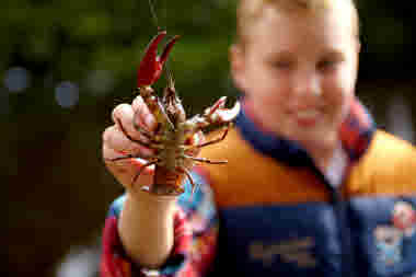 Boy holding a crayfish towards the camera - Photo cred Jonas Ingman.