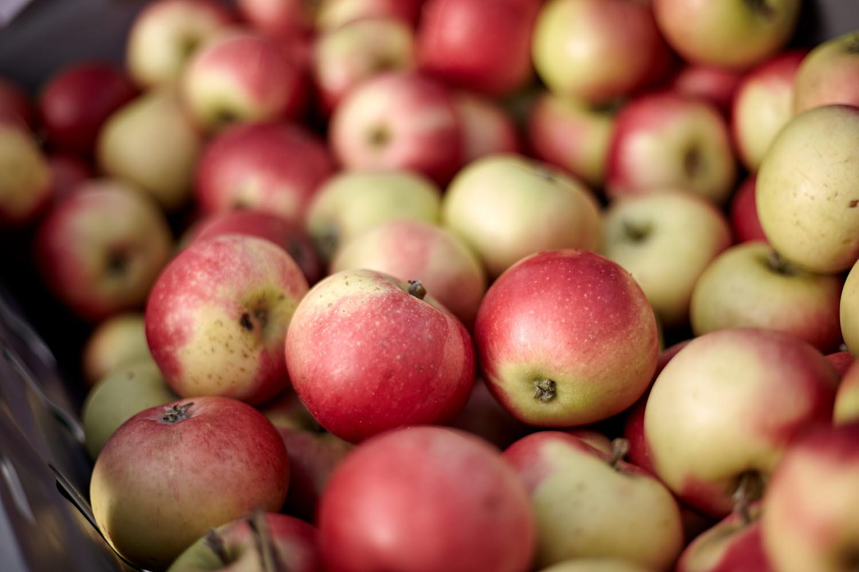 Apples - Photo Cred Jonas Ingman.jpg