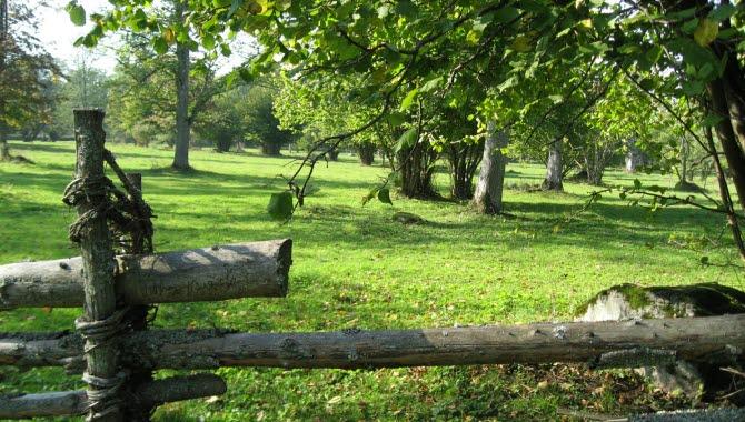 Bakom en gammal gärdesgård breder en vacker grön äng ut sig och skuggas av stora gröna träd.