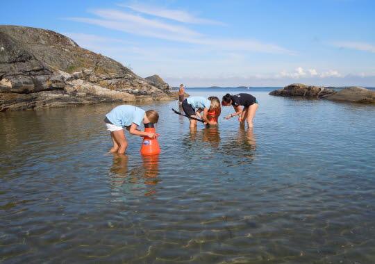 Beach guide with water binoculars in Kosterhavet National Park.