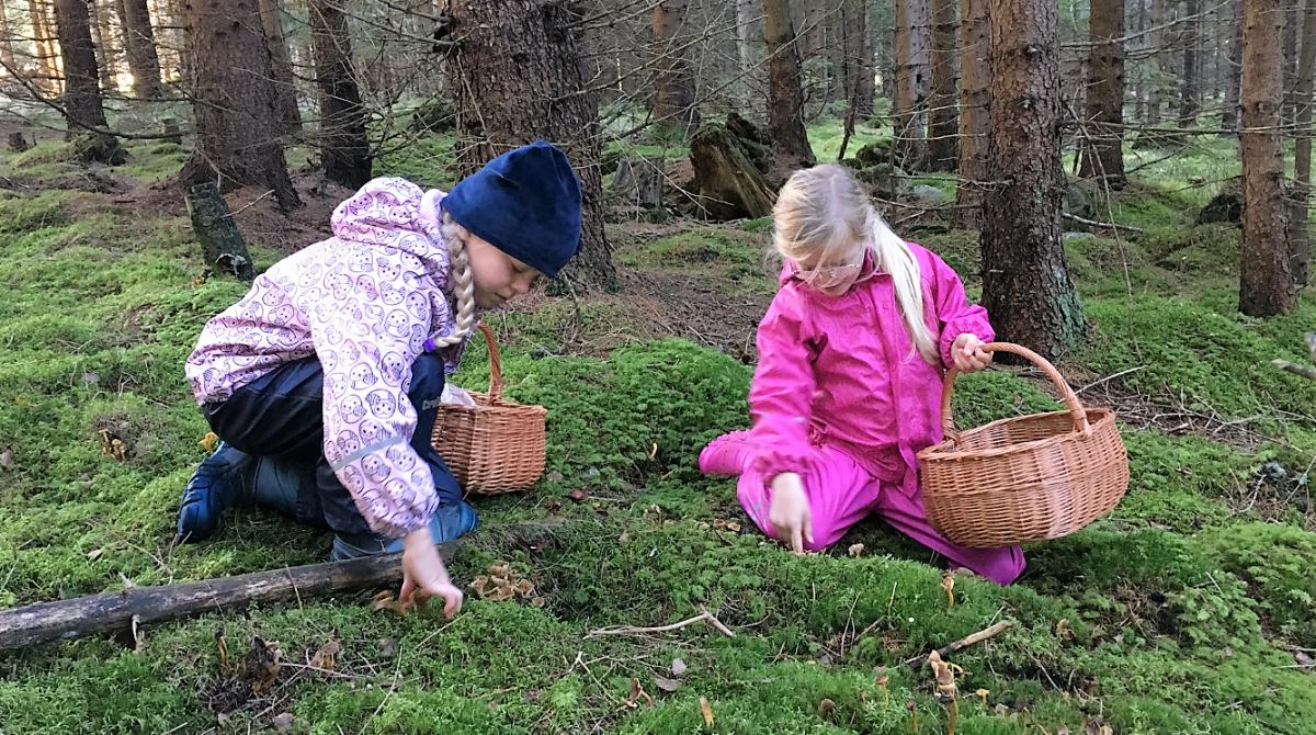 Barn i svampskogen Sävelången