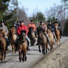 Många ryttare på islandshästar på en  skogsväg.