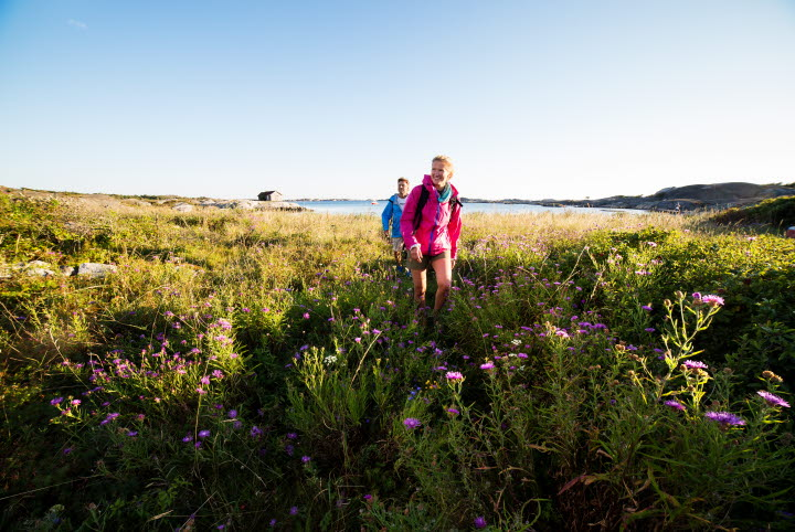 Two people are walking across a rich meadow with wildflowers. The flowers in the foreground a purple and in the background one can see the ocean.