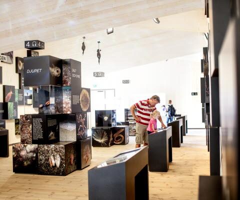 Inne på Naturum är det en utställning med information om Kosterhavet och dess olika arter. I mitten av rummet står det stora, svarta kuber med bilder på olika arter staplade på varandra.