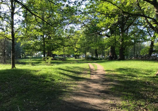 Vandringsled genom Gamla Ekuddens naturreservat i Mariestad.
