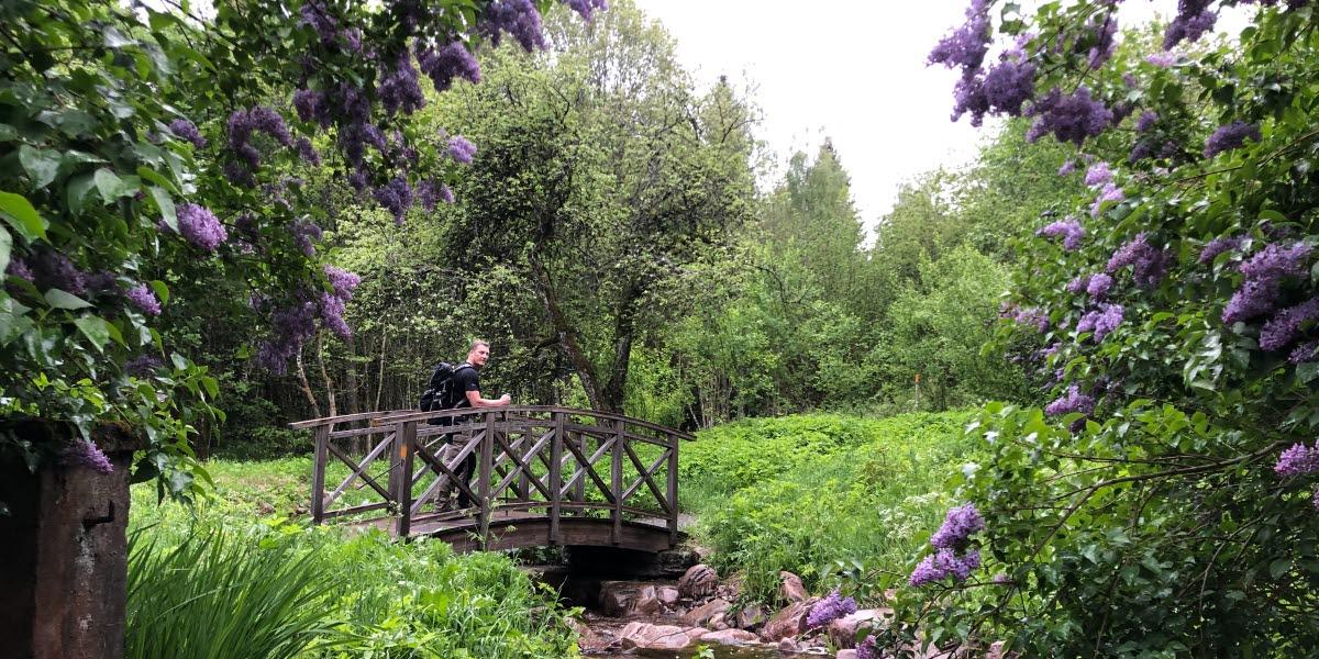 Blommande syrener, en liten bäck med en träbro över, en man går över träbron.