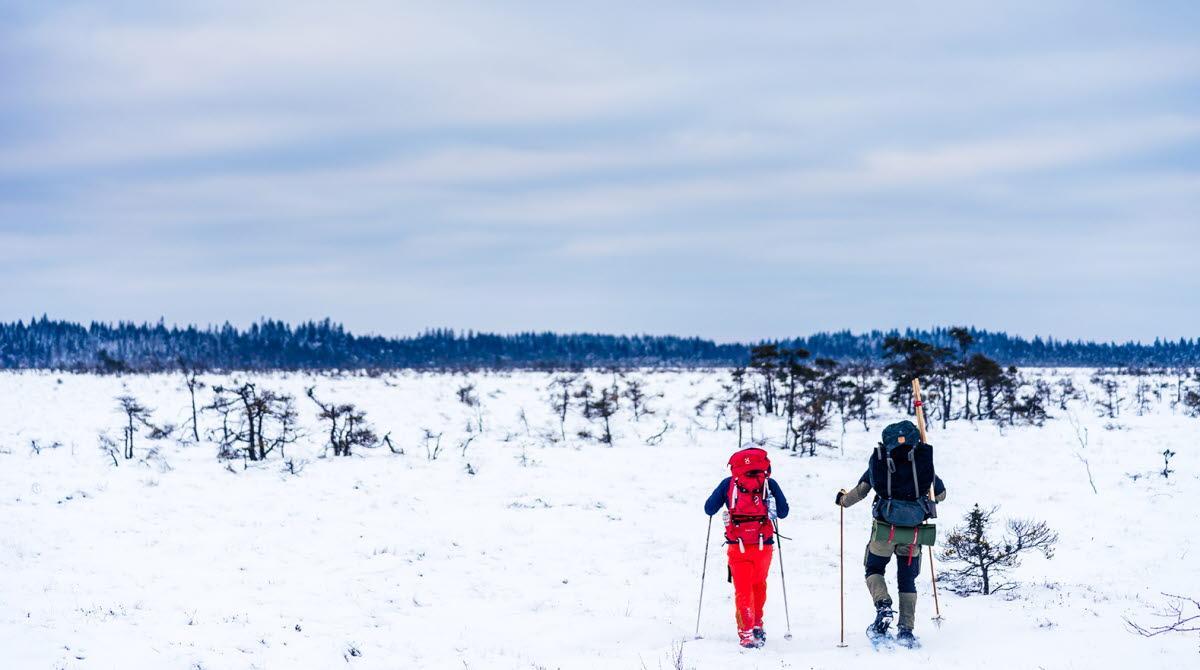 Två personer som vandrar över det karga  snötäckta landskapet på Blängsmossen i Skövde