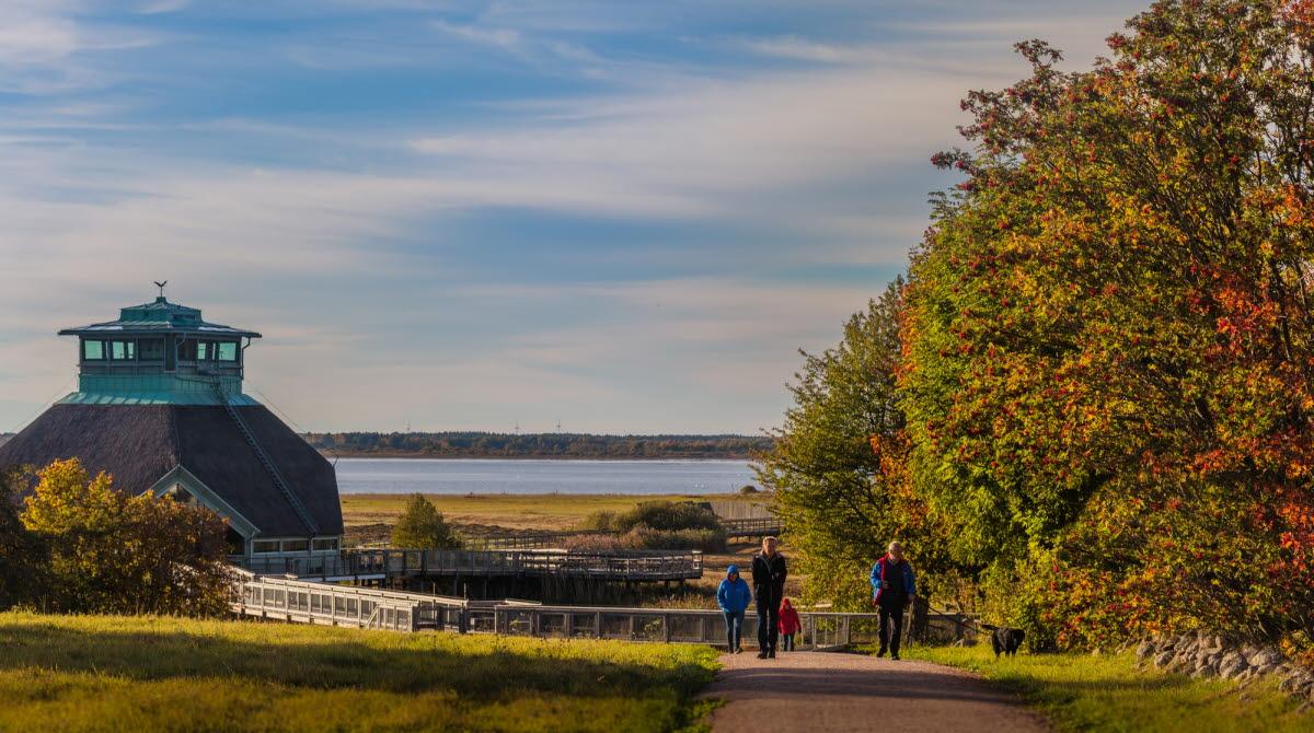 Höstfärgade löv i träden och en underbar utsikt över Hornborgasjön.