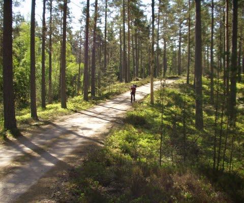 En person som går på en skogsväg på naturområdet Hökensås.