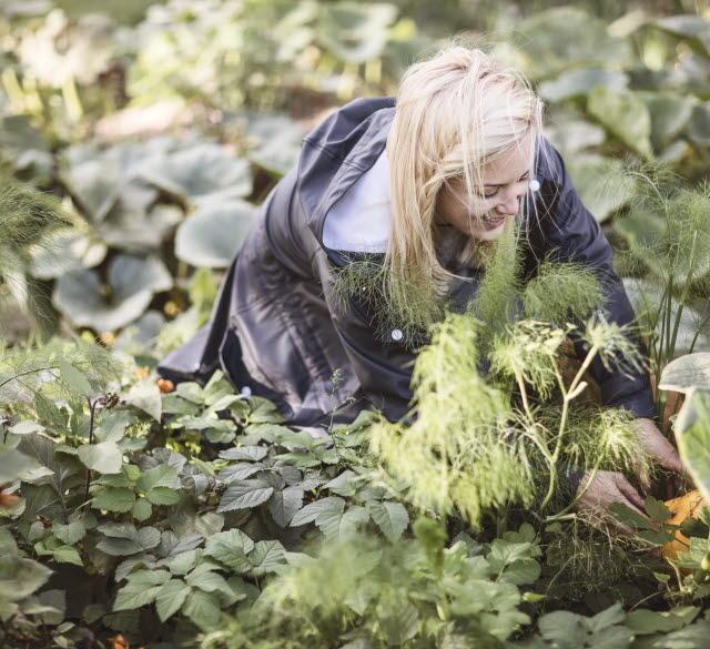 Kvinna plockar grönsaker ur land