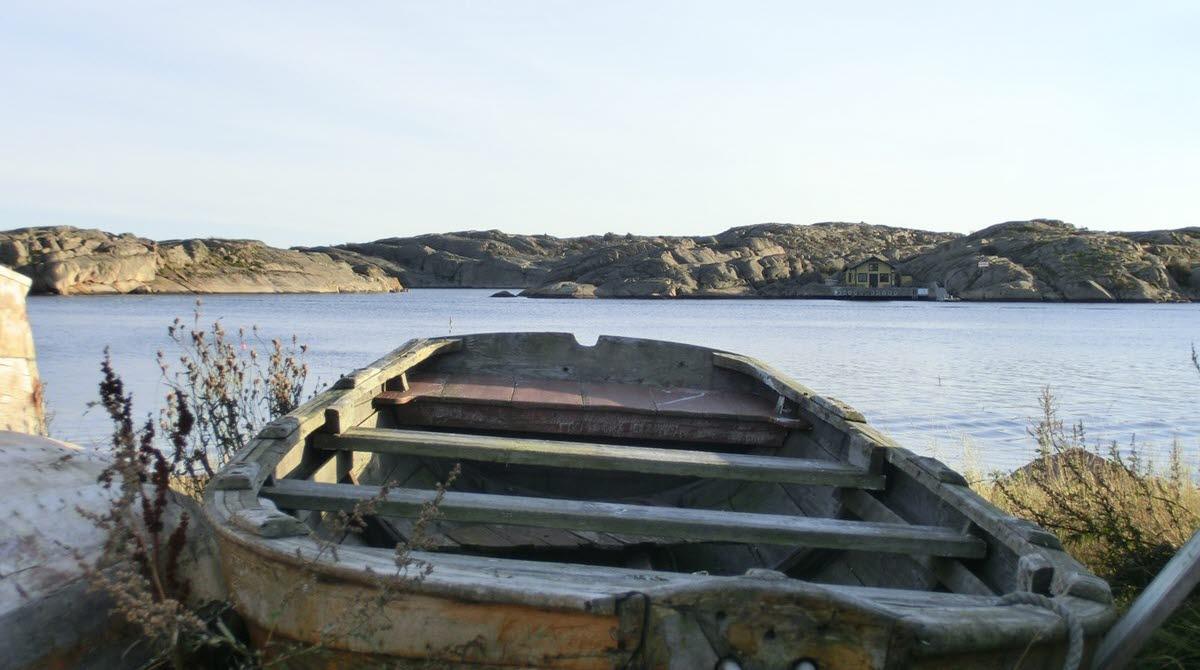 En gammal eka på land med havet i bakgrunden.