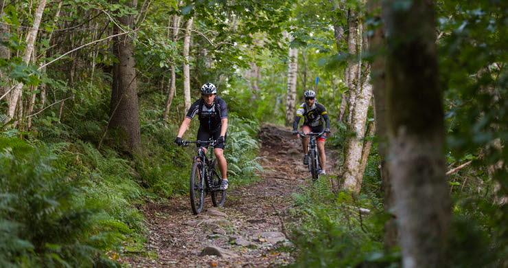 Två män cyklar MTB på en skogsstig omgiven av ljusgrön natur.