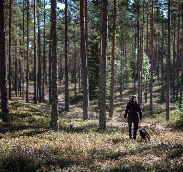 En tjej med hund vandrar i skogen på Hökensås