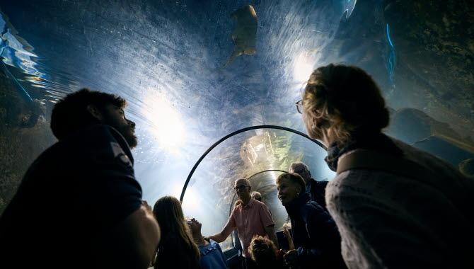 Barn aktiverar sig på Havets Hus