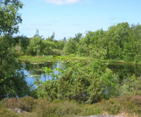 Lummig skog runt näckrosdammen på Björkö