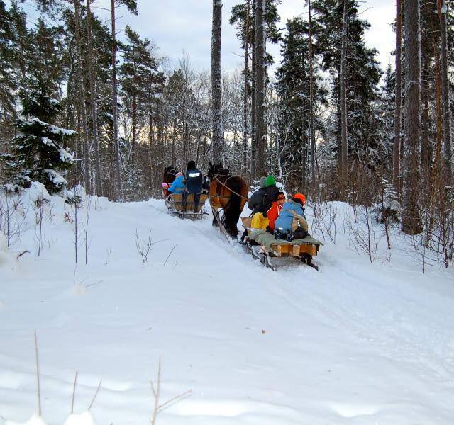 Häst med släde tar sig upp för en snötäckt backe i skogen.