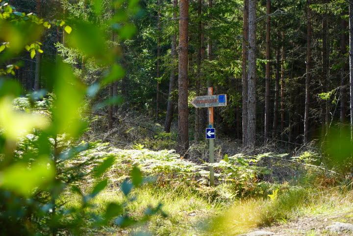 Torrskog Vanding skog