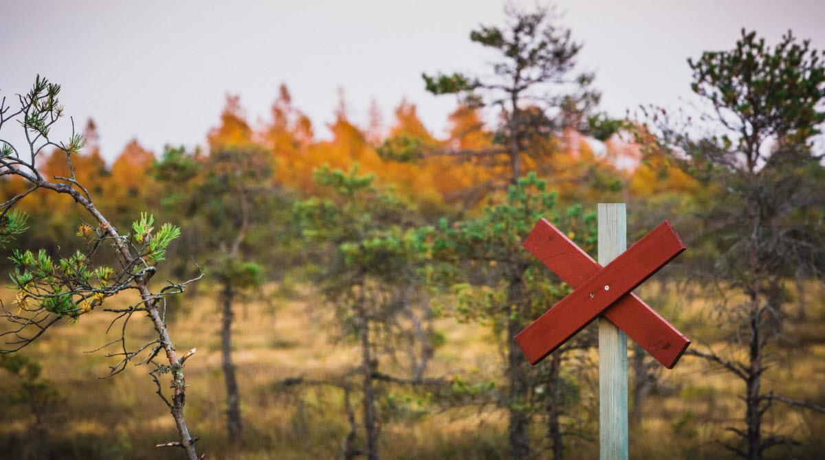 Gles fjällskog i höstiga färger med ett rött ledkryss i förgrunden