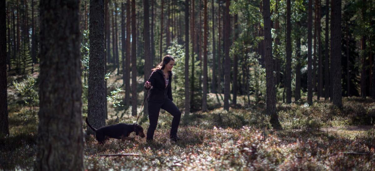 En tjej vandrar i tät skog med sin svarta hund