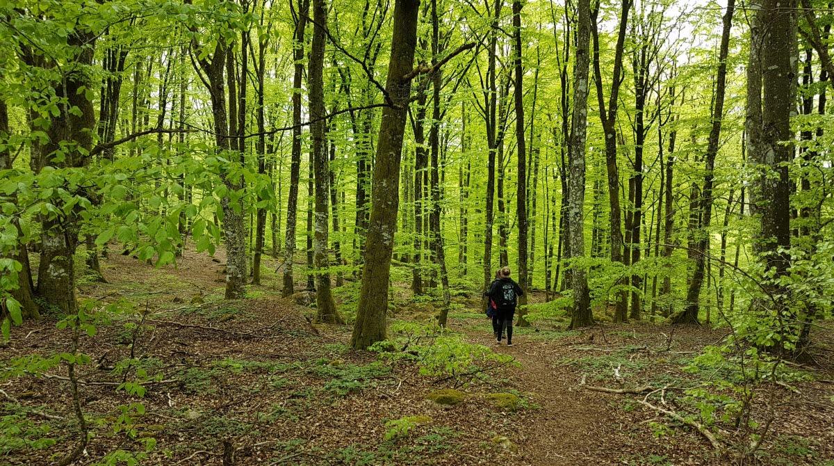 Promenad i bokskogen Hult