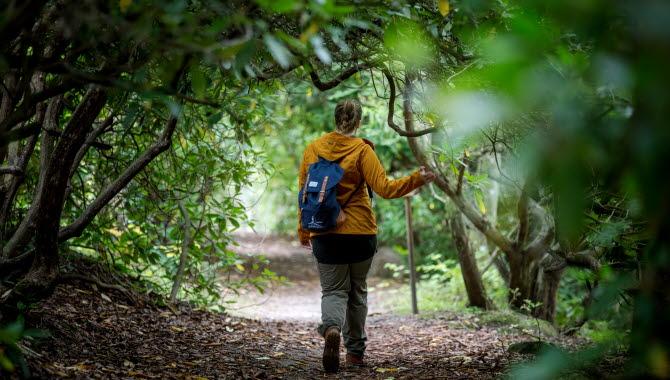 Kvinna i gul jacka vandrar på Trollstigen.