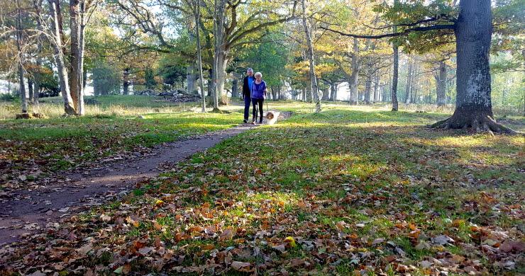 Ett par med hund i koppel promenerar på stig i Ekuddens naturreservat i Mariestad. Det är höst.