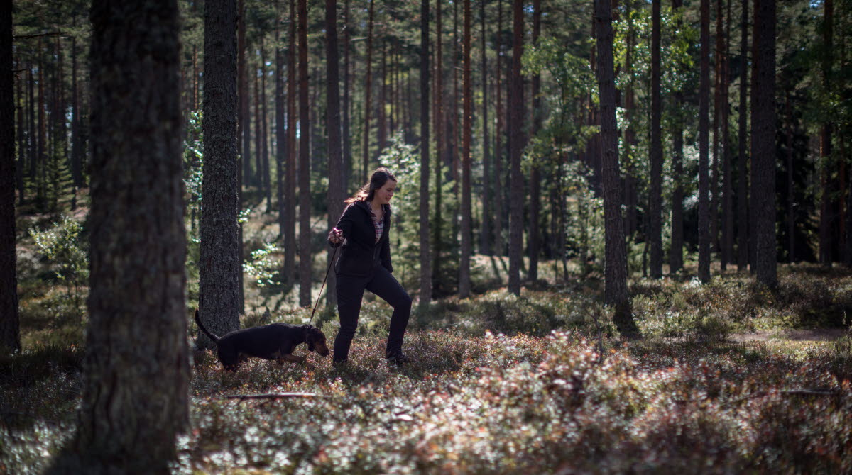 A girl waking in the woods with her blck dog