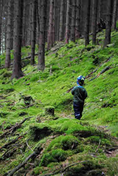 skog- Photo Cred Hanna Söderlund