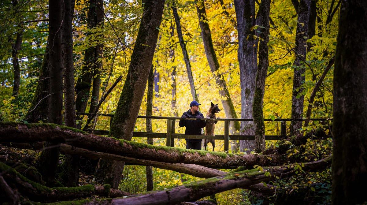 En man och en hund står och kikar på naturen från en bro. Gula löv på träden i bakgrunden.