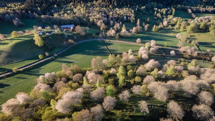 Ett flygfoto över ett körsbärsblommande Valle.