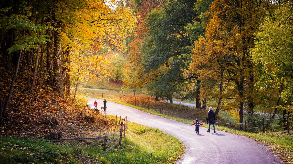 En fuktig väg slingrar sig nedför en backe. Vägen kantas av lövträd i orange, grönt och gult. På vägen går tre vuxna och ett barn.