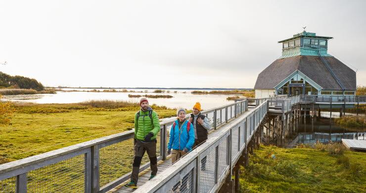 Vandring vid Hornborgasjön